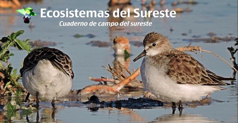 Cuaderno de Campo de Ecosistemas del sureste