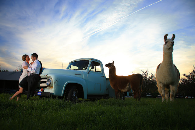 Weatherlea Farm Bride Groom & Llama