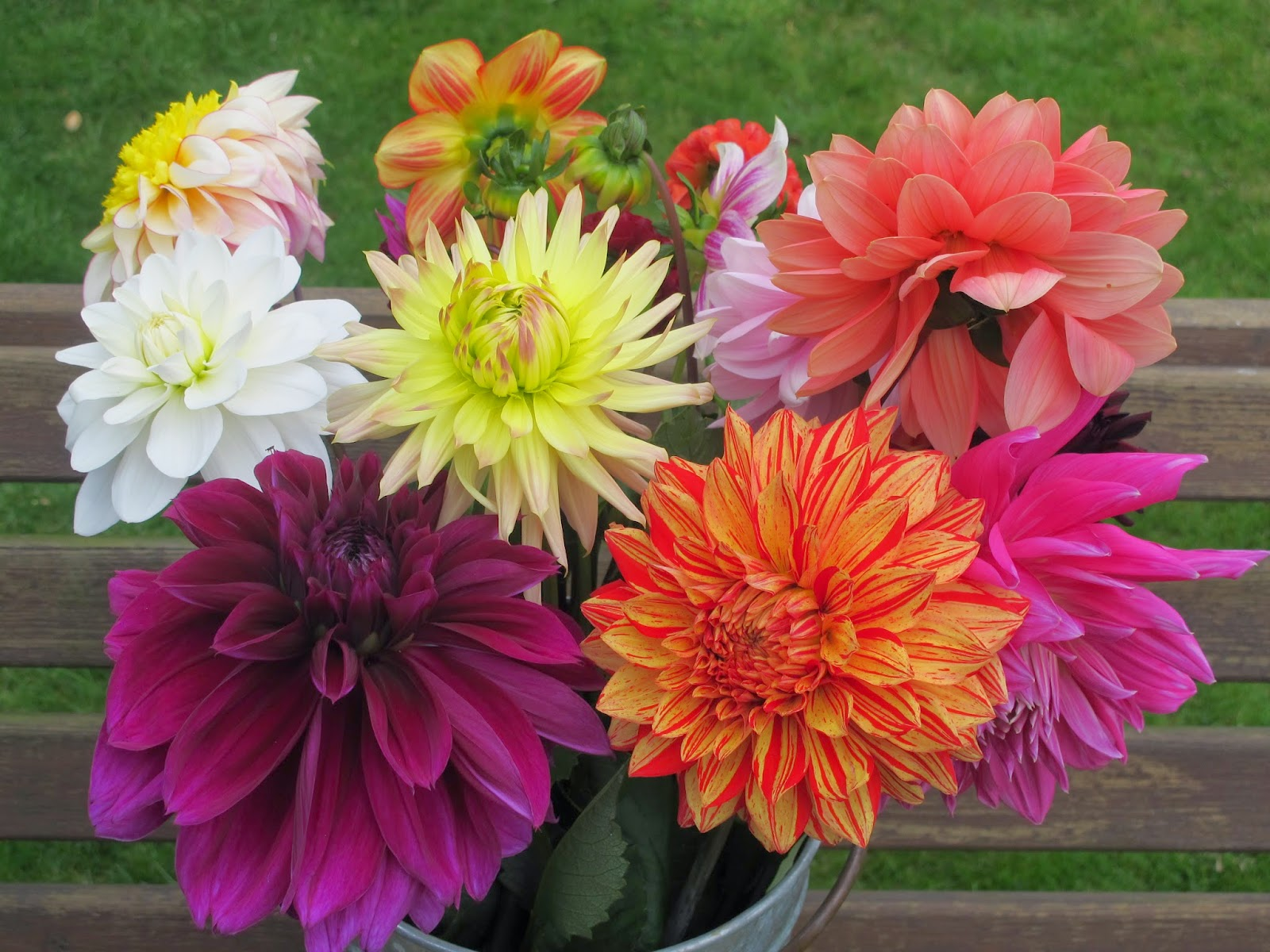 Flowers by shamini withypitts dahlias the flower field and for sussex florists this is kid in a sweet shop territory do go and visit this is my bucket of sixteen different dahlias beautiful izmirmasajfo