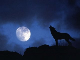 lobo-aulla-aullando
