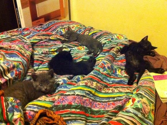 Смешные котята развалились на кровати
