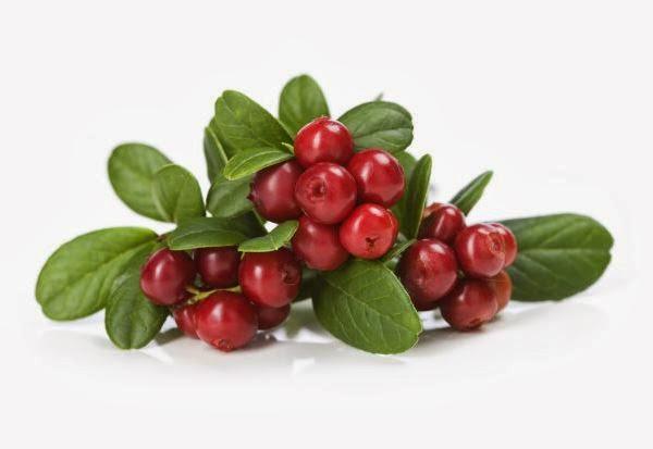 Foto da fruta da América do Norte. Saiba o que é e como a famosa frutinha chamada Cranberry pode ser ótima para sua saúde.