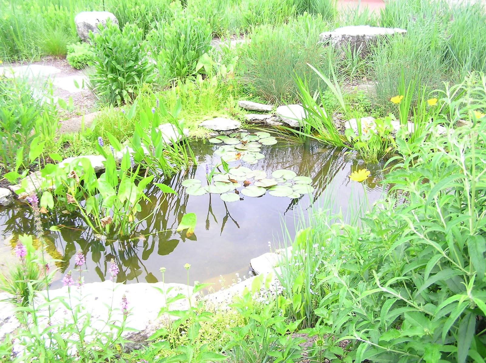 My fresh water aquarium natural planted tank walstad for Pond aquarium