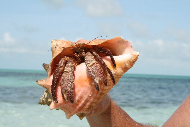 conch shell items alfa enterprises pvt ltd welcome to