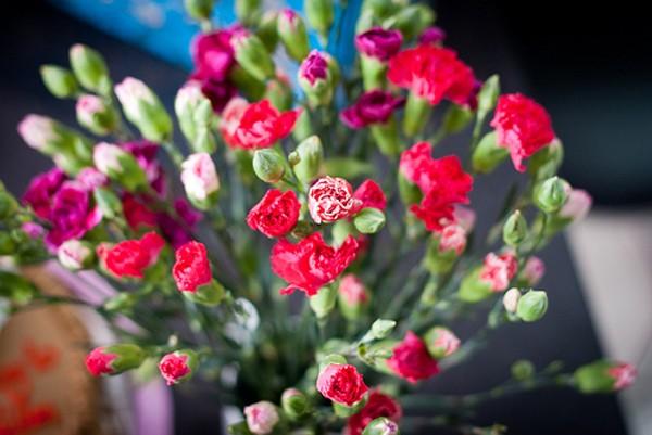 Hoa cẩm chướng, lạnh lùng đơn giản như con người Cự Giải mà thôi
