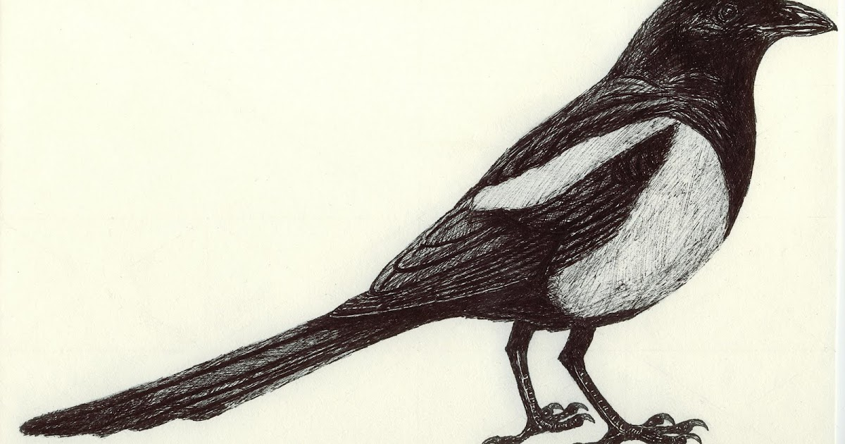 Drawing A Blank: Mr. Magpie.