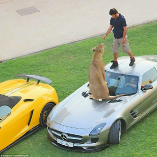 Can you Have Lions as Pets as Arab Billionaires Do.