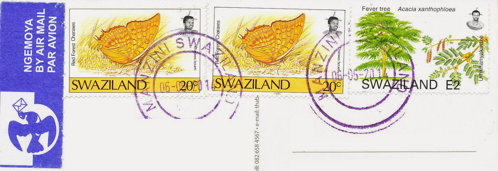 red forest charaxes, stamps, swaziland, fever tree, acacia xanthophloea