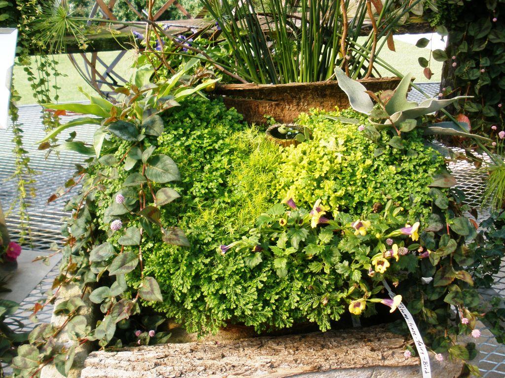 Vintage Diana Fairy Gardens And Flower Gardens
