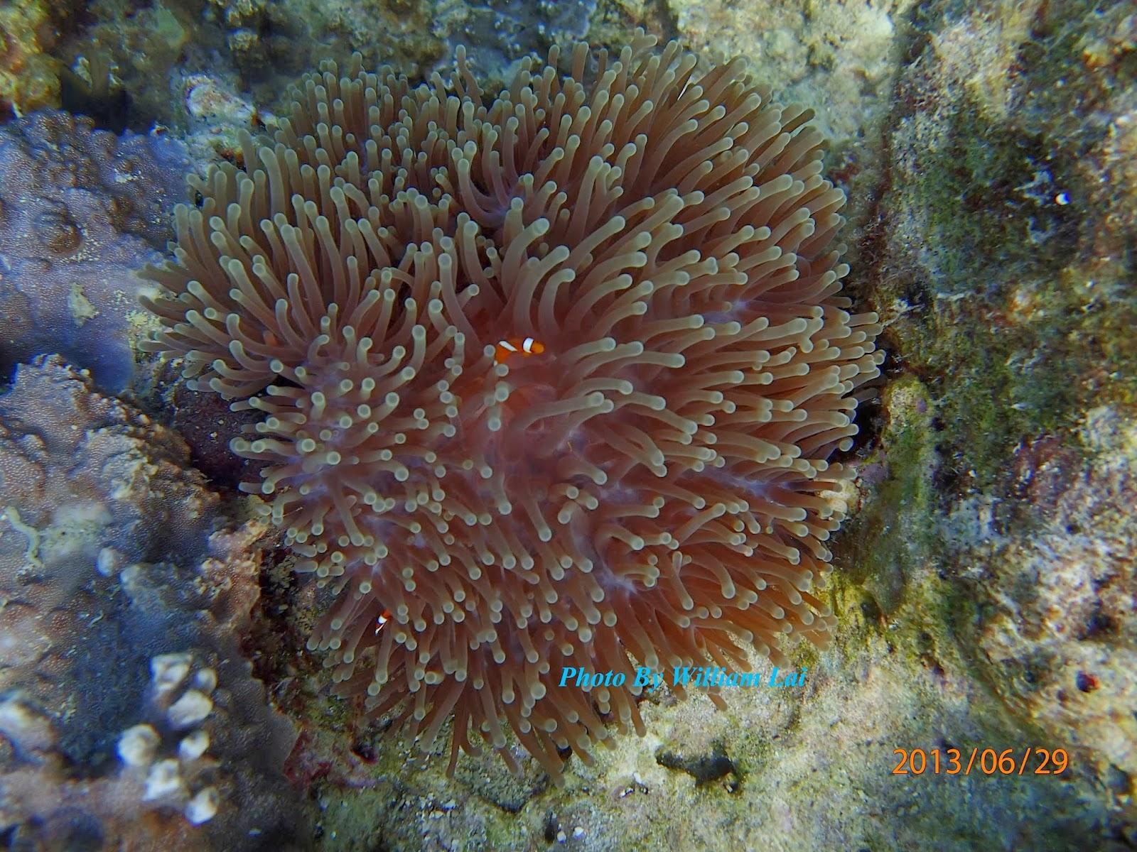 william island paradise ent   beautiful coral  u0026 fish  picture  2