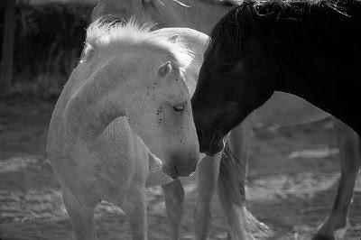 ljubavne slike konji