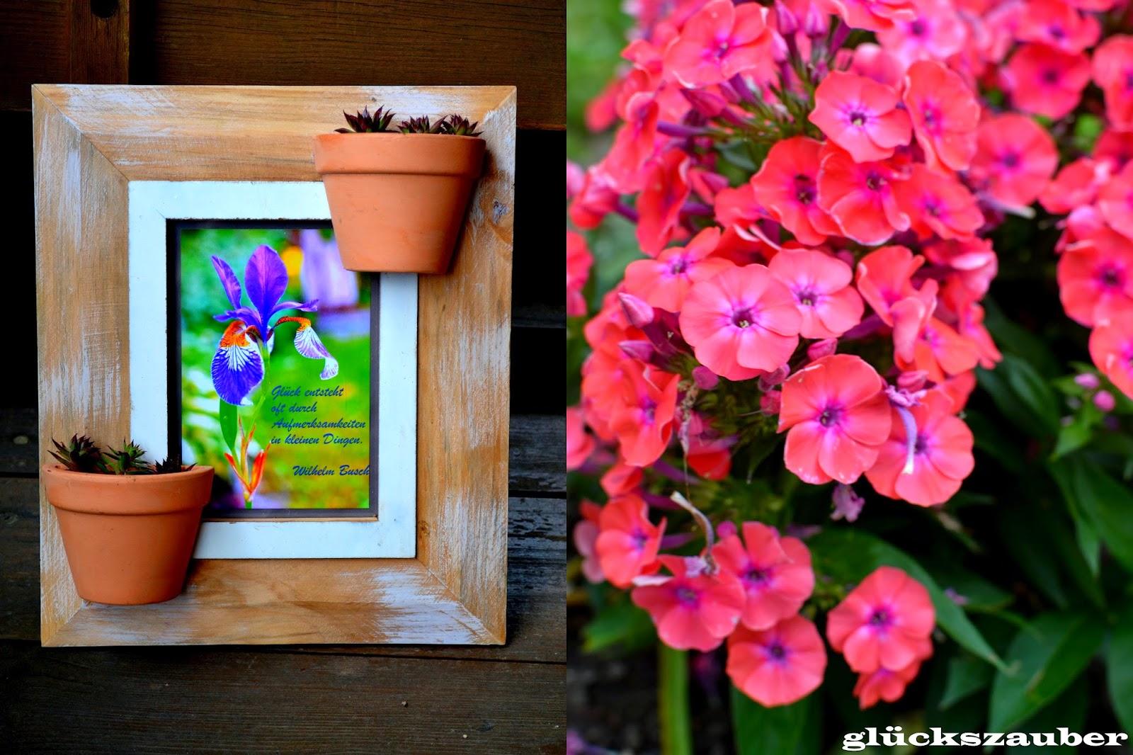 glückszauber : Diy: Bepflanzter Bilderrahmen als Geburtstagsgeschenk