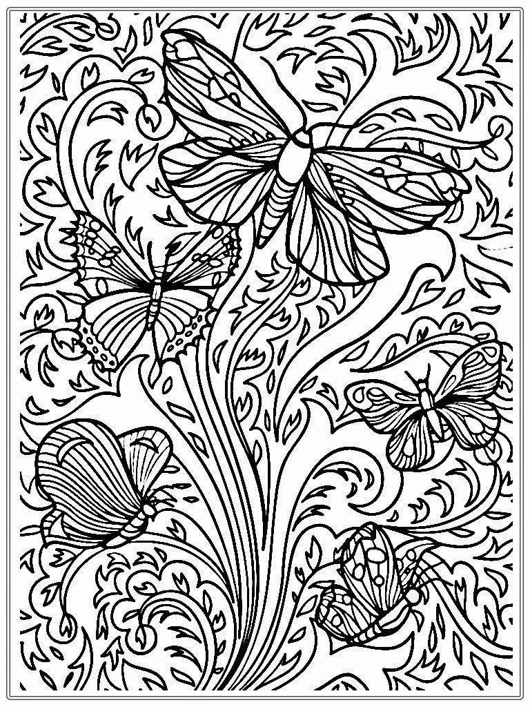 Detailed Butterfly Adult Coloring Pages Les Baux De Provence