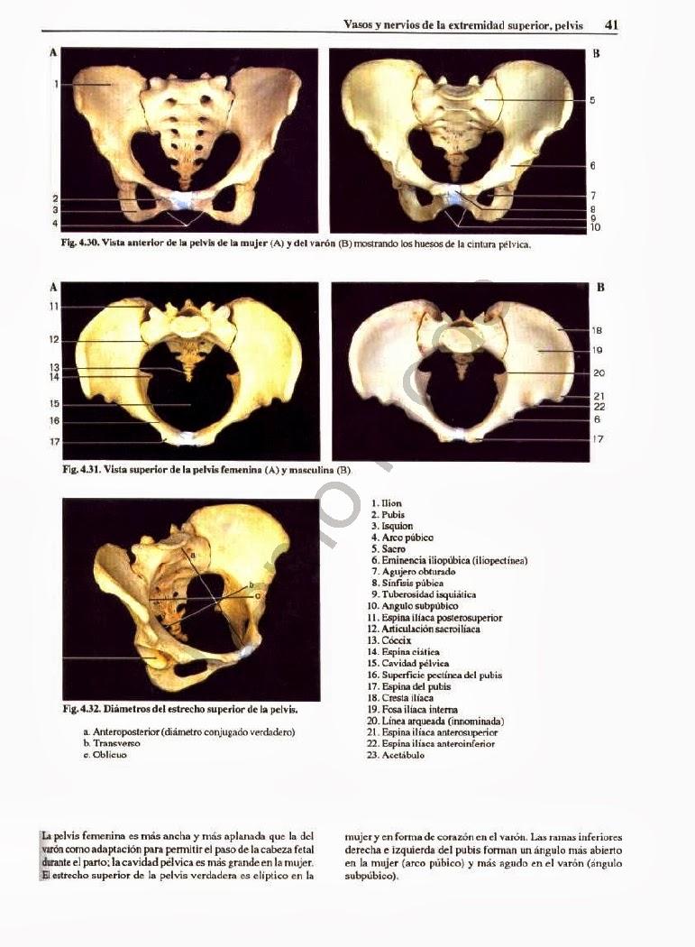 Excelente Agujeros Esenciales Anatomía Y La Fisiología Edición 12 ...