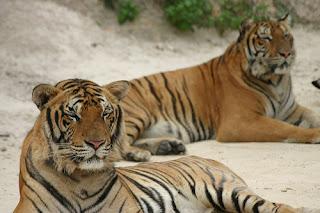 ملف كامل عن اجمل واروع الصور للحيوانات  المفترسة   حيوانات الغابة  55549553_7ecd491bda