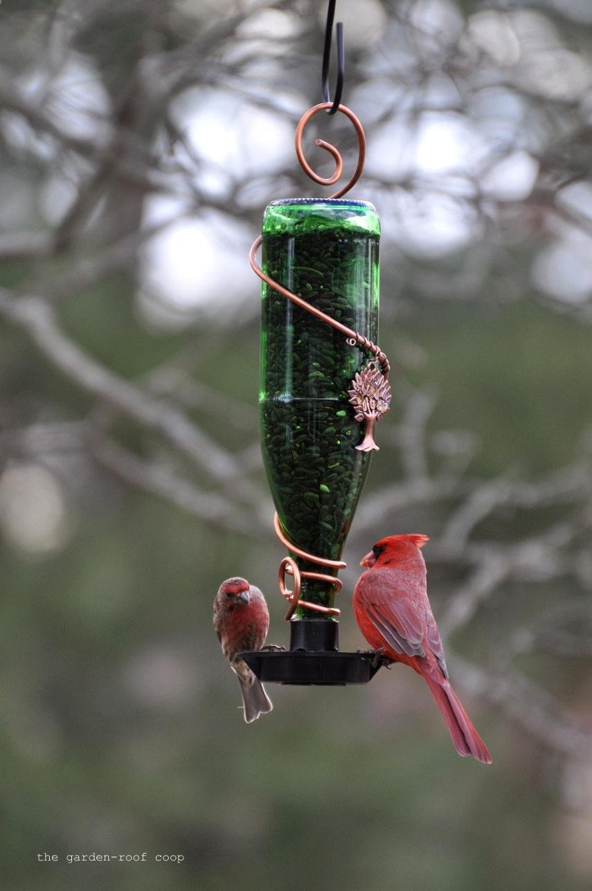 Rebecca 39 S Bird Gardens Blog Diy Glass Bottle Bird Feeders