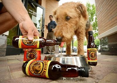 Kalau Anjing Minum Bir