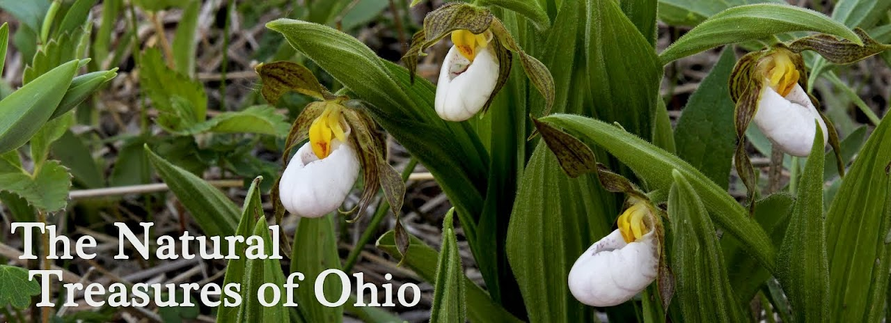 The Natural Treasures of Ohio