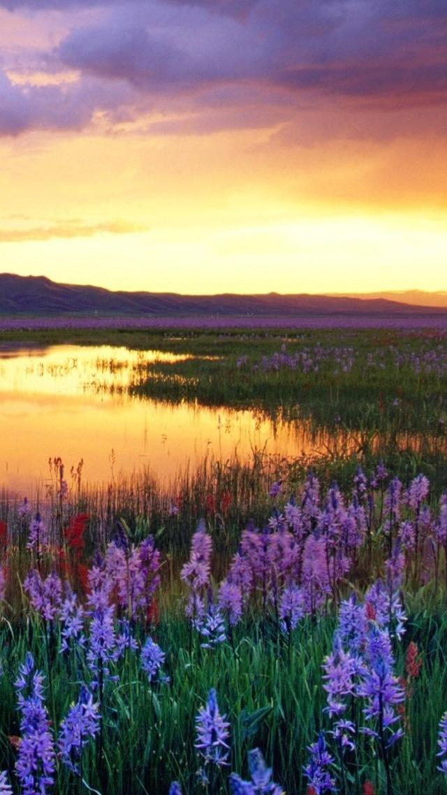 Free download spring sunset iphone 5 hd wallpapers free hd wallpapers for your iphone and ipod - Backgrounds springtime ...