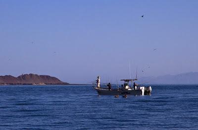 Bán giá cần câu cá tại Thanh Hóa