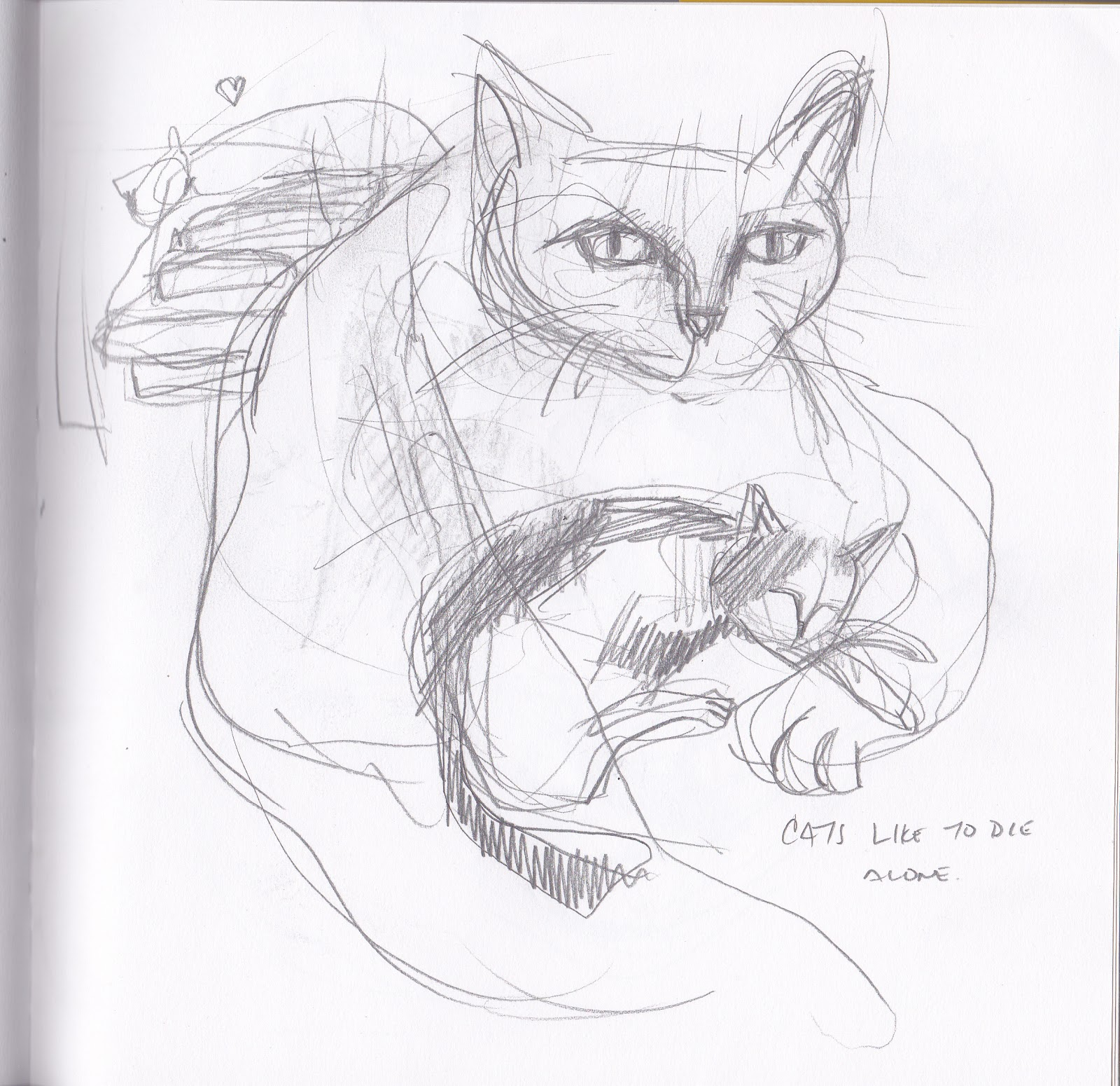 Timothy s Sketchpad  P...