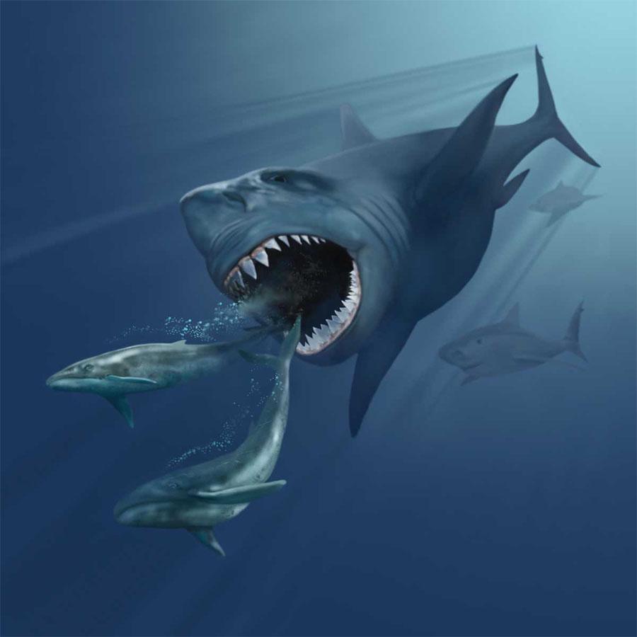 Matéria - Tubarão branco: Opeixe mais temido dos mares, corre perigo de desaparecer! VMNH_megalodon
