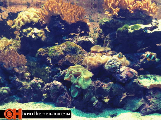 #VMY2014 - Langkawi's Underwater World