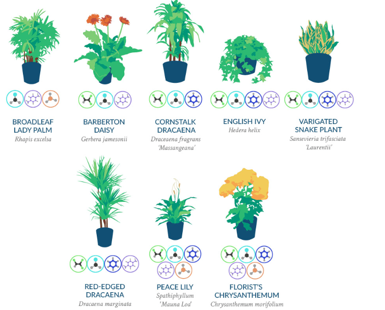 18 nasa approved air purifying houseplants first time for Nasa indoor plant list