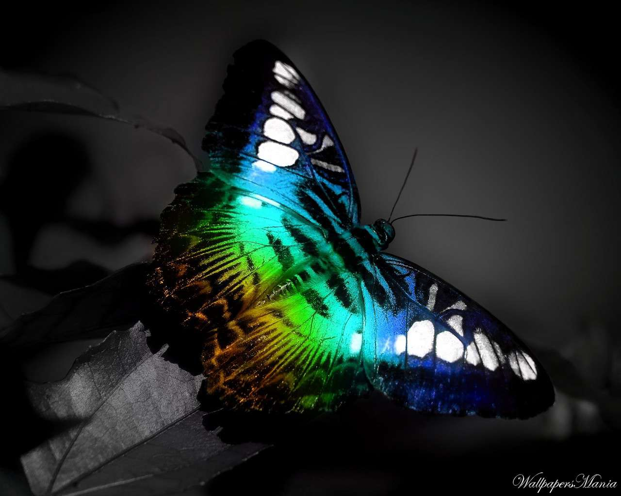 3D Colorful Butterfly