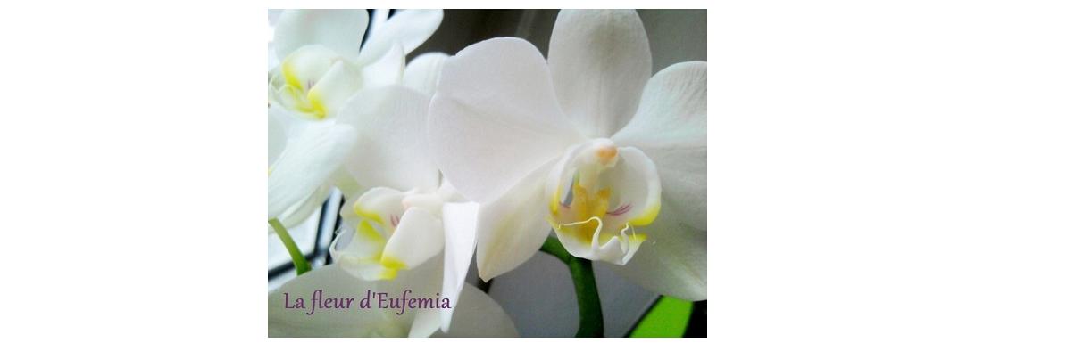 La fleur d'Eufemia
