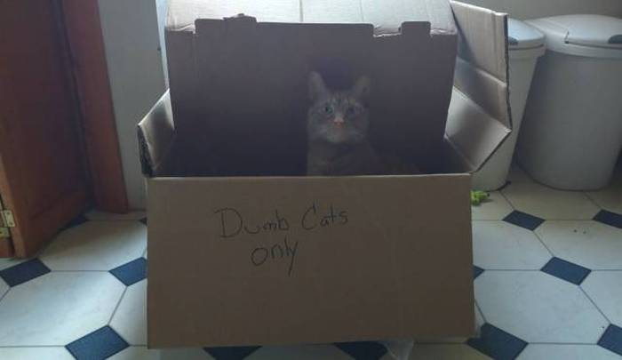 Funny cats - part 173, funny cat photos, best cat pictures