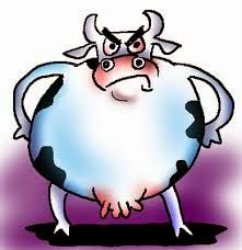 gambar kartun sapi yang lucu