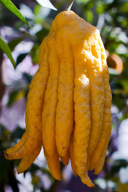 how to use budda fingers lemon