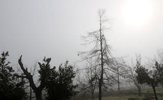 The sun is finally burning through the fog