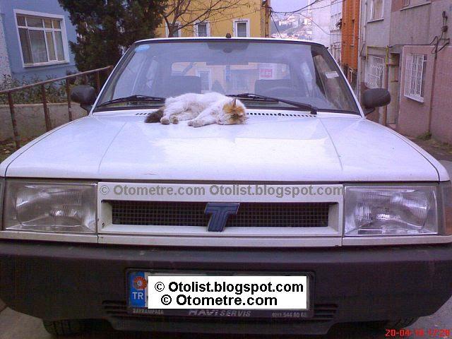 kedi ve otomobil