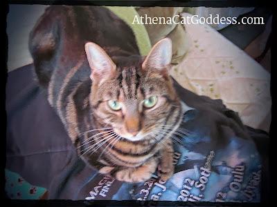 cat sitting on Nightwish hoode