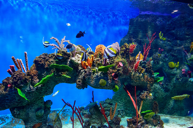 Путешествия: Москвариум Коралловый риф
