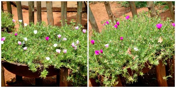 Flores, decoração rústica
