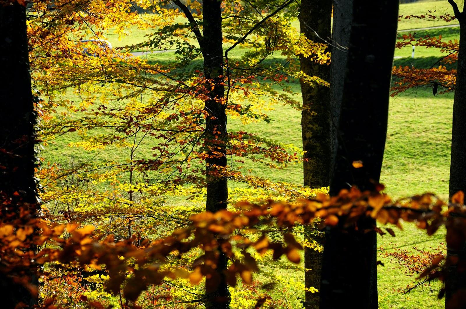 fòret suisse automne