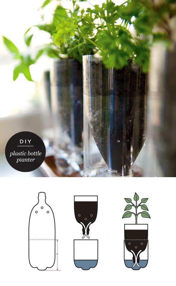 Plastic+bottle+planters 1