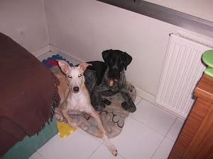 Silva y Otto