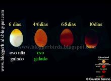 Evolução do ovo