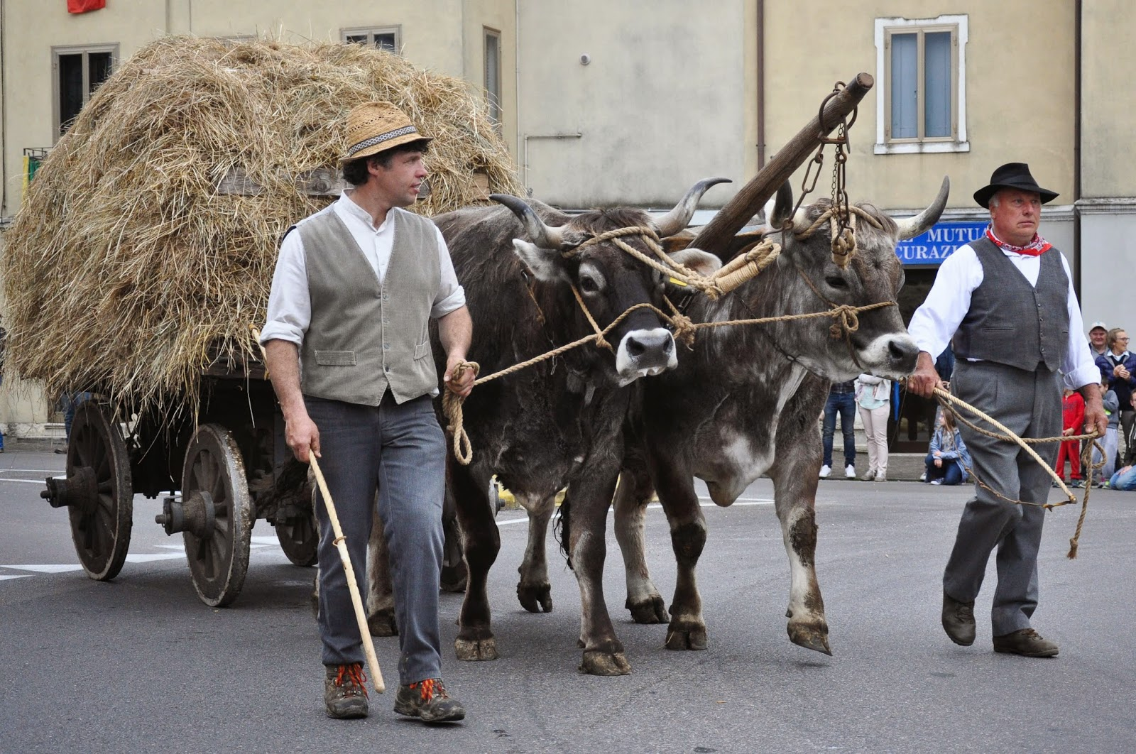 The bulls cart at the Parade, Donkey Race, Romano d'Ezzelino, Veneto, Italy-2