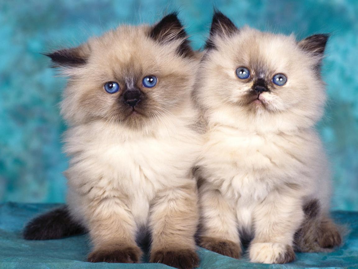 Gambar Kucing Oren Lucu godean.web.id