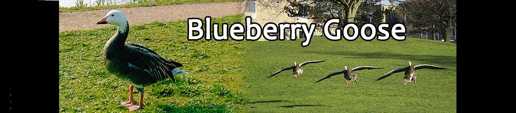 Blueberry Goose