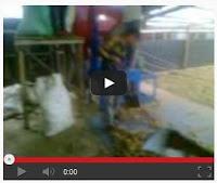 Video Proses Pembelahan Pinang Kering Klotok