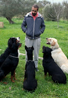 Köpeğinizin tasmasız olarak kontrolünü almaya hazır mısınız?