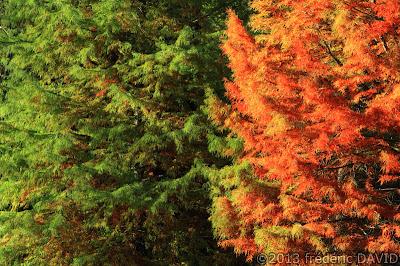 arbres forêt automne contraste Chamarande Essonne
