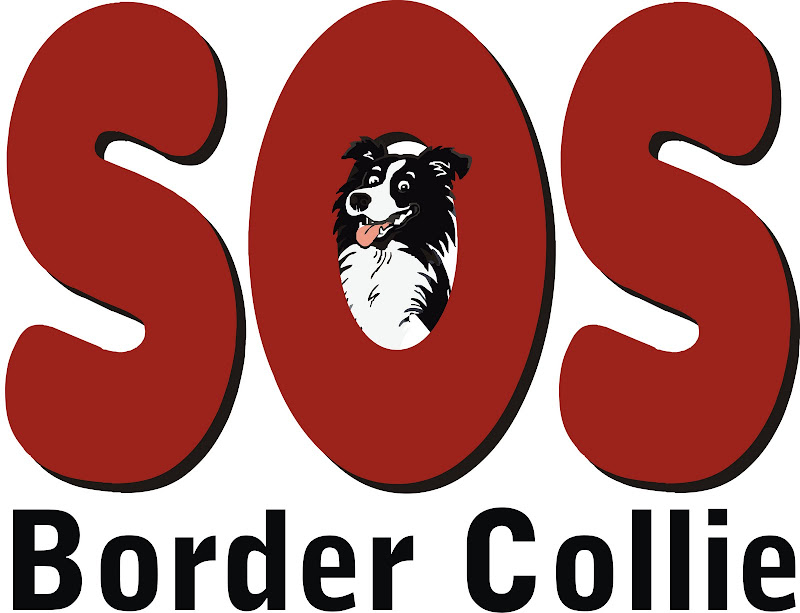 SOS Border Collie