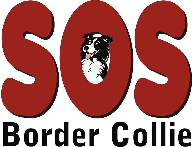 SOS Border Collie